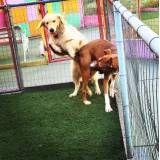 Quanto custam adestradores para cão no Brooklin