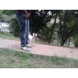 Quanto custam adestradores para cão no Pacaembu