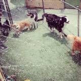 Serviço de day care para cães