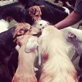 Serviço de Daycare canino no Socorro