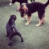 Serviço de Daycare de cachorros em Pinheiros