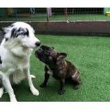 Serviço de Daycare de cães no Campo Limpo