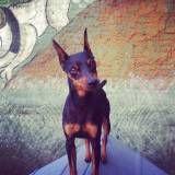 Serviço de Daycare de cão  na Vila Mariana