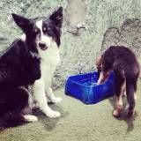Serviço de Daycare para cachorro no Itaim Bibi