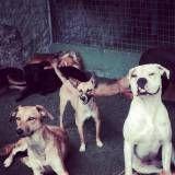 Serviço de daycare para cachorros