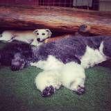 Serviço de Daycare para cães no Socorro