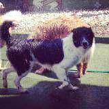 Serviço de Daycare para cão  em Interlagos