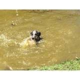 Serviço de hotéis de cachorro na Água Branca
