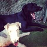 Serviço de hoteizinhos de cachorro  na Cidade Ademar