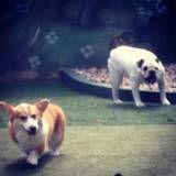 Serviço de hoteizinhos de cachorros  em Osasco