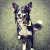 Serviço de hoteizinhos de cães no Aeroporto