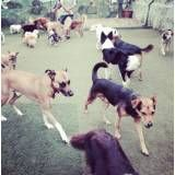 Serviço de hoteizinhos de cão em Interlagos