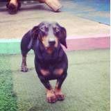 Serviço de hoteizinhos para cachorro  em Interlagos