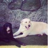Serviço de hoteizinhos para cão  em Sumaré