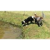 Serviço de hotel para cachorros no Brooklin