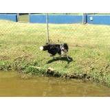 Serviço de hotel para cão no Sacomã