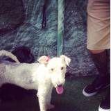 Serviço de hotelzinho de cachorro no Itaim Bibi
