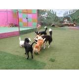 Serviço de hotelzinho de cachorros  em Alphaville