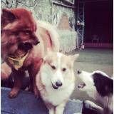Serviço de hotelzinho de cães  em Sumaré