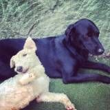 Serviço de hotelzinho para cachorros  na Água Branca