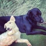 Serviço de hotelzinho para cachorros  no Jockey Club
