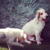 Serviço de hotelzinho para cães no Brooklin