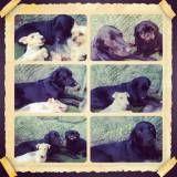 Serviço de hotelzinho para cão  em Moema