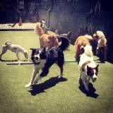 Serviços de Daycare de cachorros em Santana de Parnaíba