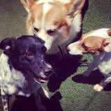 Serviços de Daycare de cão  no Campo Belo