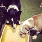 Serviços de Daycare para cão  no Jardim Paulistano