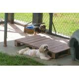 Serviços de hotéis de cão em Taboão da Serra