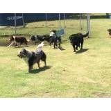 Serviços de hotéis para cachorro em São Lourenço da Serra
