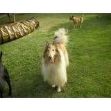 Serviços de hotéis para cães no Jockey Club