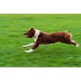 Serviços de hotéis para cão no Jockey Club