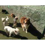 Serviços de hoteizinhos de cachorro  no Campo Limpo