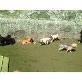 Serviços de hoteizinhos de cachorros  em Interlagos