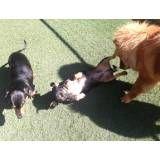 Serviços de hoteizinhos de cães no Jockey Club
