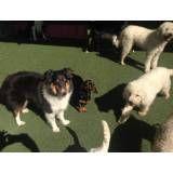 Serviços de hoteizinhos de cão em Alphaville