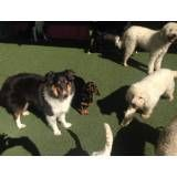 Serviços de hoteizinhos de cão no Alto de Pinheiros