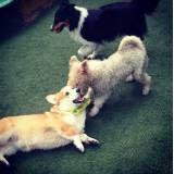 Serviços de hoteizinhos para cachorros  em Moema