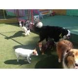 Serviços de hoteizinhos para cão  em Itapevi