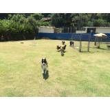 Serviços de hotel para cachorros no Morumbi