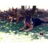 Serviços de hotel para cães no Alto de Pinheiros