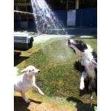 Serviços de hotel para cão no Jardim Europa