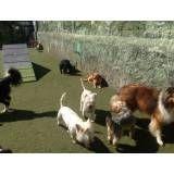 Serviços de hotelzinho de cachorro na Cidade Dutra