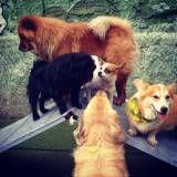 Serviços de hotelzinho de cachorros  em Jandira