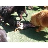 Serviços de hotelzinho de cães  em Alphaville