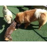 Serviços de hotelzinho de cão  em Cajamar