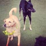 Serviços de hotelzinho para cachorro  no Jardins