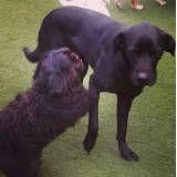 Serviços de hotelzinho para cachorros  em Barueri